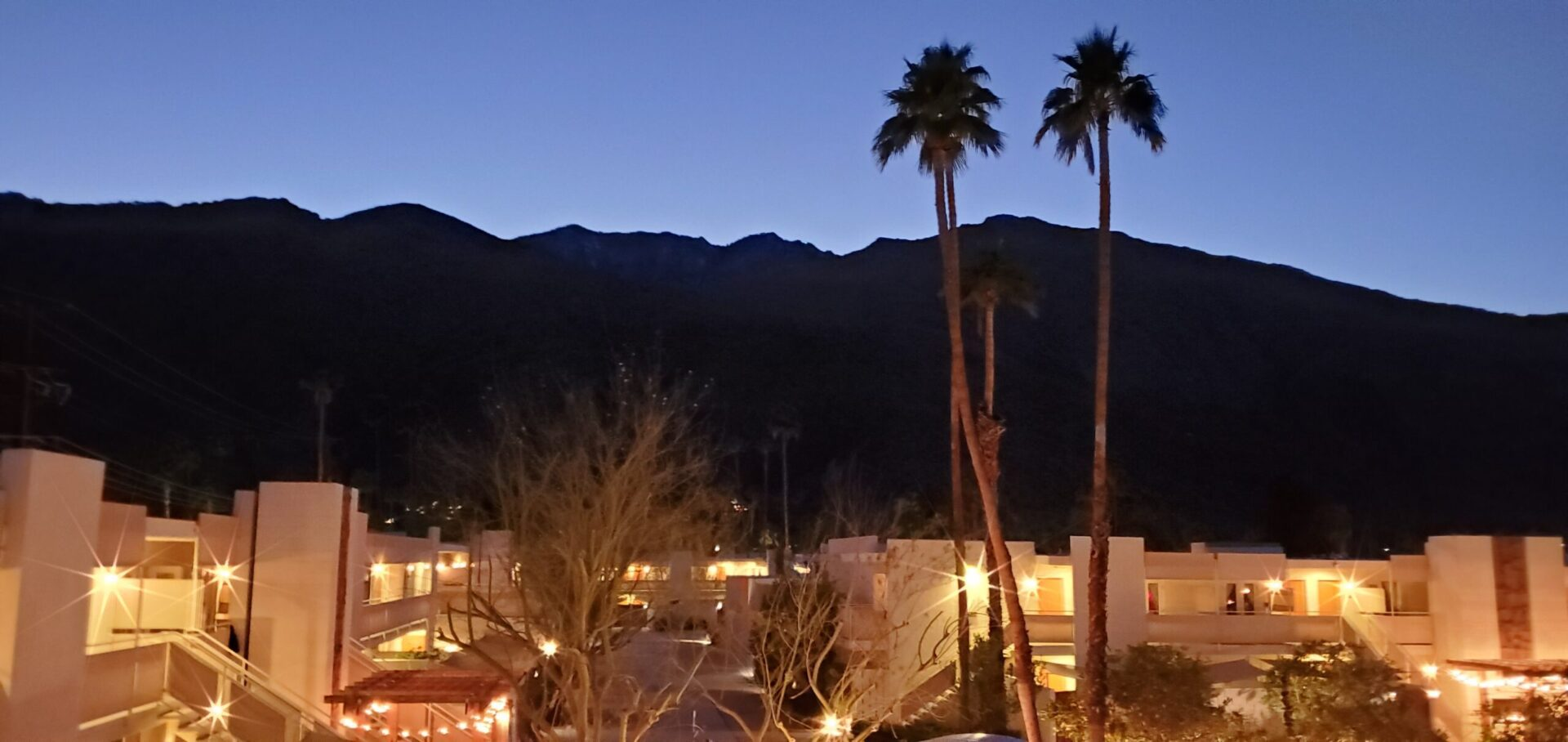 Ace Hotel Palm Springs pool at night