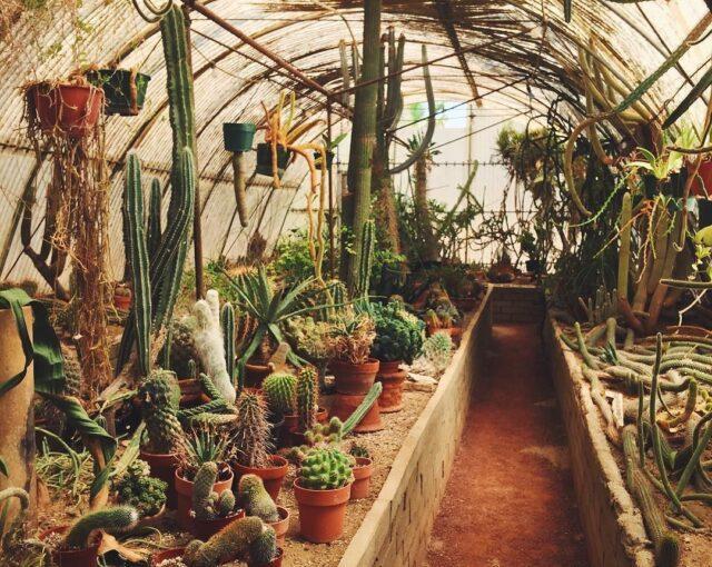 Moorten's Botanical Garden