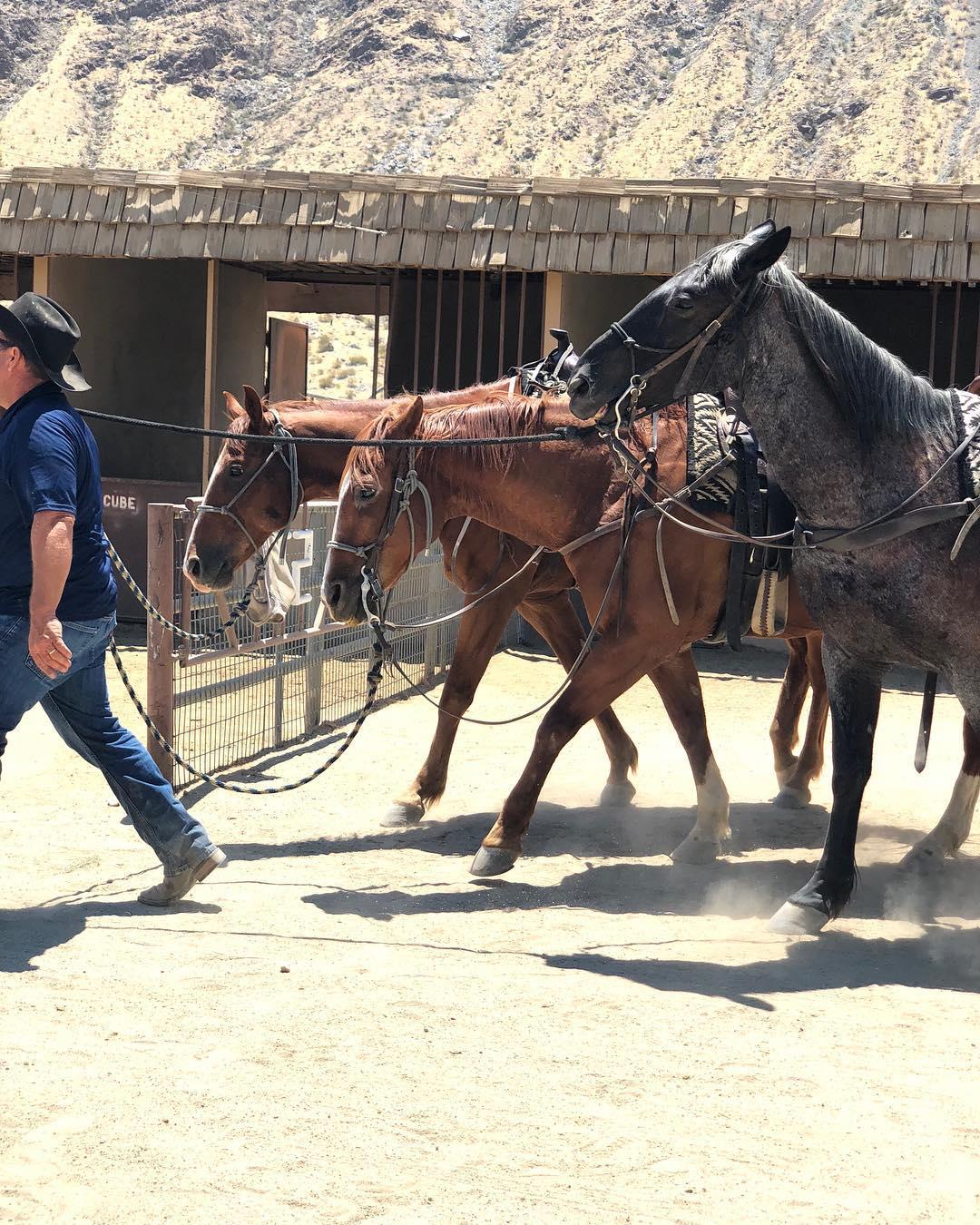 smoke tree stables horses
